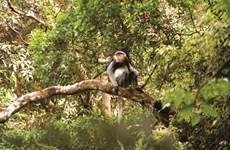 Kon Plông, un trésor de biodiversité à conserver