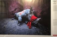 Une exposition de photos de la presse mondiale 2020 s'ouvre à Hanoi