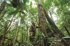 Ju Ha Gian, l'ange gardien de la forêt de Da Nhim