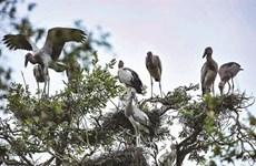 Tourisme expérientiel au Parc national de Tràm Chim