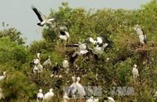 Le delta du Mékong fait face à un déclin des oiseaux, poissons et plantes sauvages
