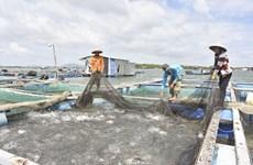 À Bà Ria-Vung Tàu, une aquaculture 4.0…