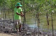 Des ménages de Tra Vinh plantent des forêts pour prévenir l'érosion côtière