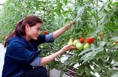 Ces jeunes agriculteurs qui font fortune dans leur terre natale