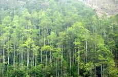 Le Vietnam vise 225.000 ha de forêts de production plantées en 2021