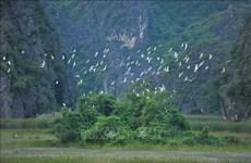 Le Vietnam cherche à conserver et utiliser de façon durable les zones humides