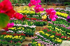Quang Binh accueillera le Festival international des fleurs en 2023