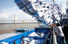 Le prix à l'exportation du riz vietnamien à un niveau élevé