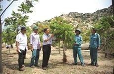 Ninh Thuân reverdit ses zones arides avec une espèce forestière indigène