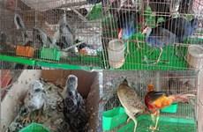 Les Vietnamiens veulent bannir les marchés d'animaux sauvages
