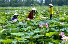 Le tourisme prend son essor dans la capitale du lotus