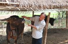 Yên Bai : élevage en montagne pour lutter contre la pauvreté