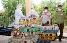 Le trafic des volailles de contrebande maîtrisé