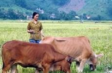 Aide de l'AFD au secteur privé rural au Vietnam