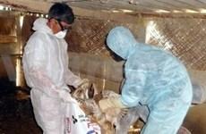 Grippe aviaire et humaine: séance plénière du PAHI