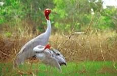 Bonne gestion des espèces sauvages au Sud