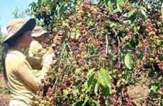 Les entreprises américaines s'intéressent au café vietnamien