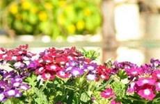 La BM finance une alliance de production florale