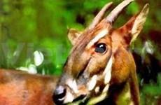 Soutien de WWF pour la préservation du Sao la