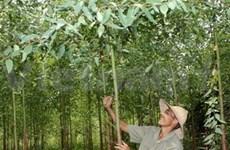 L'APFNet aide le Vietnam dans la gestion durable des forêts