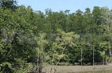 HCM-V cherche à promouvoir la mangrove de Can Gio