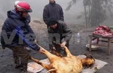 Plus de 25.000 bovins morts de froid dans le Nord
