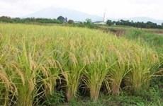 WEF: Les expériences du VN sur le développement agricole appréciées