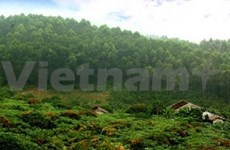 Le Vietnam répond à l'Année internationale des forêts