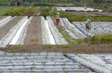 Vietnam-Mexique : coopération élargie dans l'agriculture