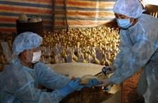 Bilan de la prévention de la grippe aviaire hautement pathogène