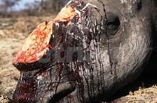 Il n'y a plus de rhinocéros de Java au Vietnam
