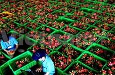Renforcement de l'exportation de fruits aux Etats-Unis