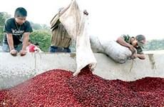 Vietnam: les entreprises de café s'assagissent