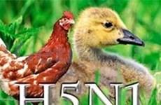 L'USAID finance un projet de lutte contre la grippe aviaire