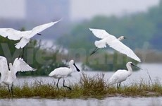 Forum sur les zones humides au delta du Mékong