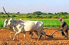 Agriculture : 35 millions de dollars pour le Cambodge