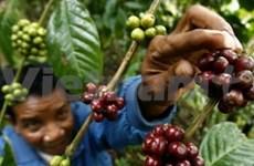 Café : baisse des exportations en juillet