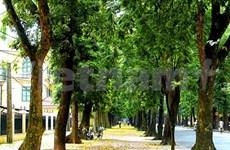 L'air de rien, la capitale Hanoi respire bien mieux