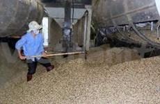 Café : record d'exportation de 3,4 milliards de dollars