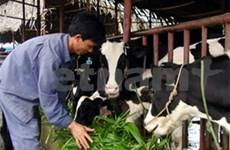 Friesland Campina soutient l'élevage de vaches laitières