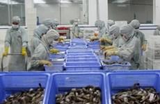 Les exportations de crevettes prennent l'eau