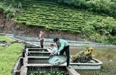 Le village de Van Hung s'enrichit par l'élevage des trionyx