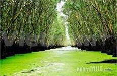 Immersion dans la forêt humide de Trà Su