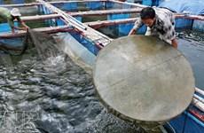 La pêche est déjà bonne sur le lac-réservoir de Thac Bà