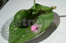 Propos sur la culture vietnamienne du bétel et de l'arec