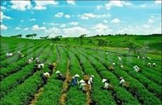 La BAD donne un coup de pouce à l'agriculture verte du Vietnam