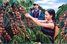 Le 4e Festival du café, un rendez-vous plein d'arômes