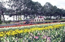 Sa Dec, le village aux quatre printemps à Dông Thap
