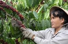 La Standard Chartered soutient le commerce du café au Vietnam