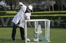 H7N9 : l'OMS envoie une équipe d'experts en Chine